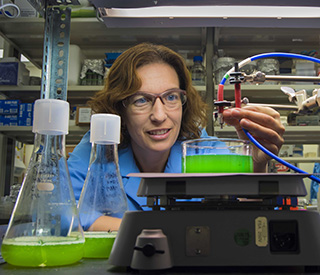 Sandia, ASU collaborate on algae computational modeling